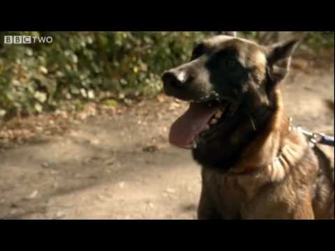 Dog Communication with Humans - Horizon: The Secret Life of the Dog - BBC Two