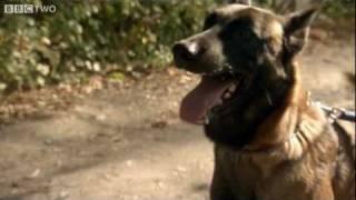 Dog Communication with Humans - Horizon: The Secret Life of the Dog - BBC Two