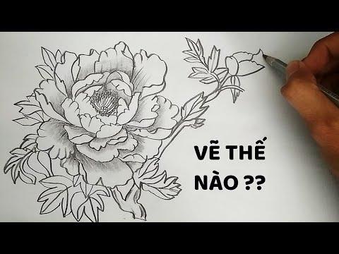 Vẽ Hoa Mẫu Đơn bằng bút chì – how to draw Peony