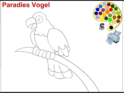 Parrot Coloring Pages For Kids - Parrot Coloring Pages - YouTube
