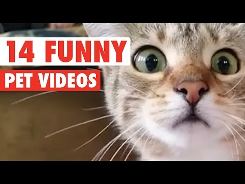 14 Hilarious Pet Videos 2016