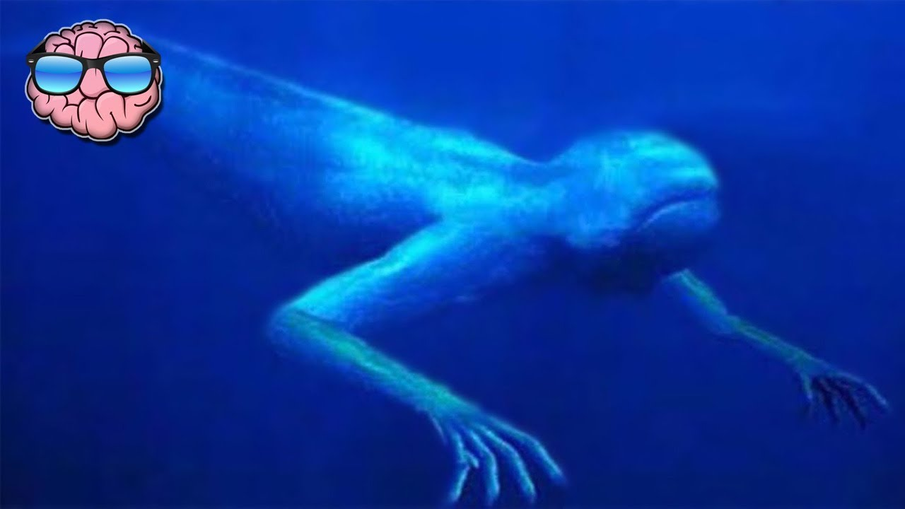 top 10 sea monster sightings caught on tape youtube