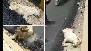 Construction workers in India build a street over a sleeping dog