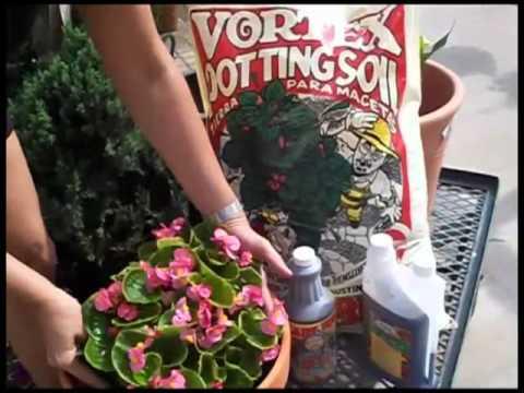 Potted Plants With Ladybug Organics
