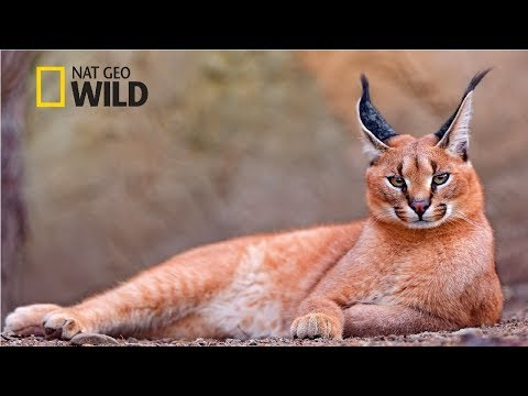 Strange Animals of Asia [National Geographic Documentary 2017 HD]