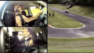 Amazing Dog Can Do Drifting !