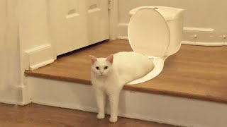 Funniest Cats 😹 - Don't try to hold back Laughter 😂 - Funny Cats Life