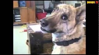 Дразним разговаривающую собаку (озвучка Шарик Шоу)