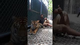 Our trip to the Tiger Kingdom in Phuket, Thailand 2018