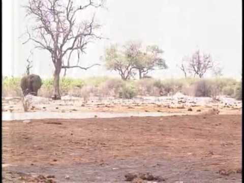 30Lions Kill Elephant