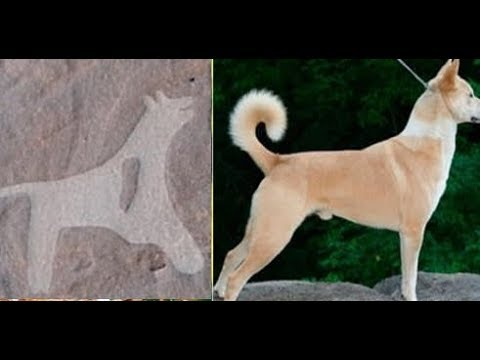 The world's first images of dogs are found on 8,000 year old rocks in Saudi Arabia
