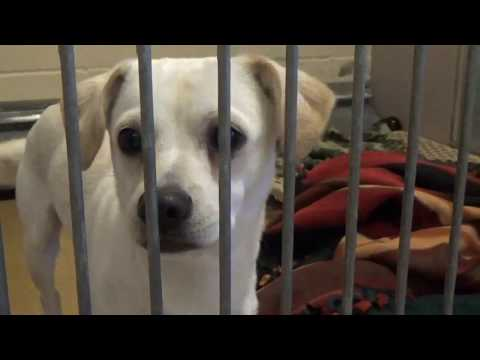 Please Help Save Young 1 yr. Shelter Dog Kurt! By Sept. 28th!