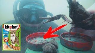 Реакция РАКА на КИТЕКАТ кошачий корм. Как ловить раков руками / Sergei Sorokin рыбалка на реке 2018