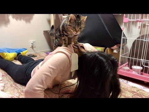 妹の筋トレ中にテンションが上がって邪魔しに来てしまった猫w