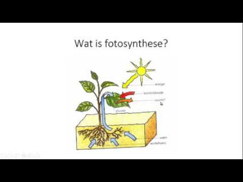 Fonkelnieuw Planten en fotosynthese - YouTube US-48