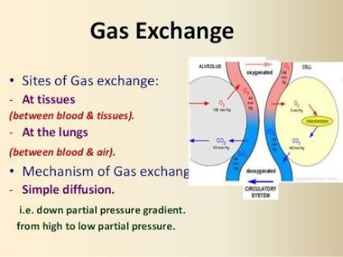 Zoology 11th std-Chp:-13 HUMAN RESPIRATION.Part 4:-Transport of Gases