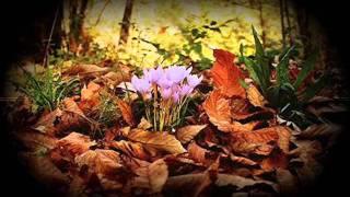 Antonietta Mennitti- La voce della natura