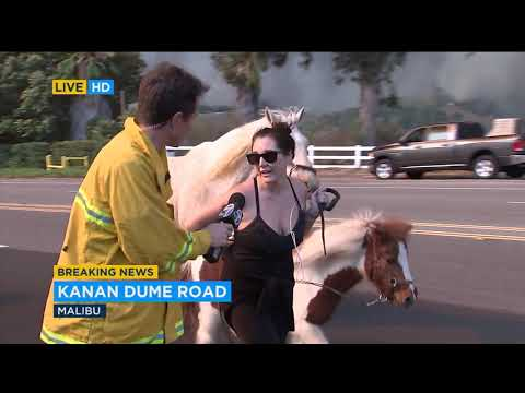 Horses, other animals evacuated as Malibu homes threatened by Woolsey Fire | ABC7
