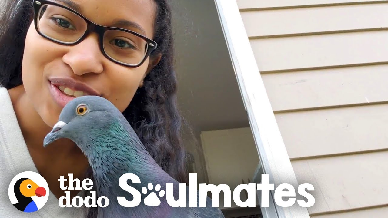 This Woman's Baby Is A Rescue Pigeon | The Dodo Soulmates