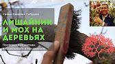 Опрыскивание деревьев весной - YouTube