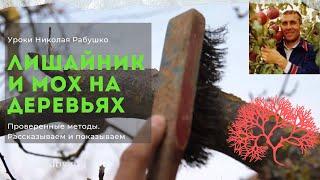 Смотреть видео ствол груши во мхе