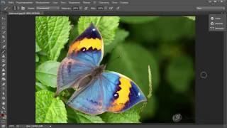 Уроки фотошопа (Photoshop) Зинаиды Лукьяновой. Урок 1.3