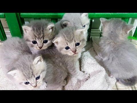 Вопрос: Когда котята начнут ползать и видеть после рождения?