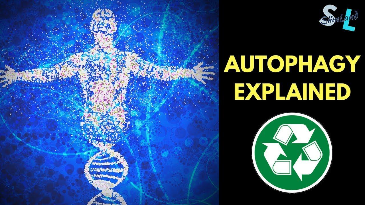 What We Know About Autophagy   So Far    - Autophagy