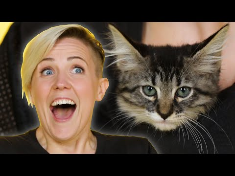 Thumbnail: Hannah Hart Plays With Kittens While Answering Fan Questions