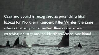 Meet Caamano Sound-Part 1: Shorelines to Orca