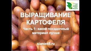 """Как вырастить картофель """"ведро с куста"""" #картофель"""