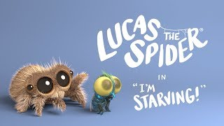 What's a spider gotta do to get some food around here?! Wait...what does Lucas eat??  Check out our online store for Lucas the Spider merchandise! https://teespring.com/stores/lucas-the-spider-shop  © 2019 Fresh Interactive Inc. All Rights Reserved.