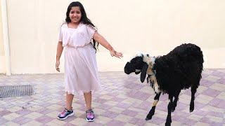 شفا خافت من خروف العيد !!