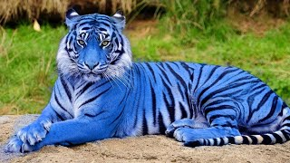 Один на Весь Мир! Это Самые Редкие Животные в Мире