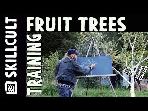 Fruit Tree Training Explained, Modfied Central Leader & Delayed Open Center