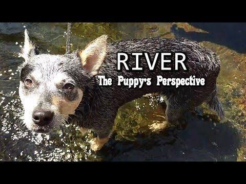 River - Puppy Perspective