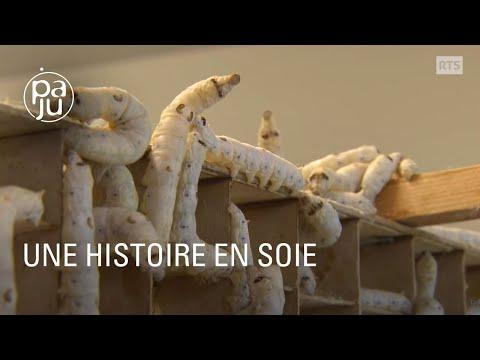 """""""Une histoire en soie"""" ou le retour de la production de vers à soie en Suisse"""