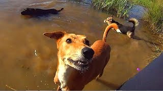 CORGI POOL PARTY - Sony Action Cam HDR-AS10 Sunny Light Test Video
