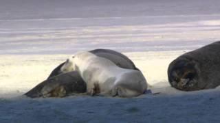 北極に行った時の動画