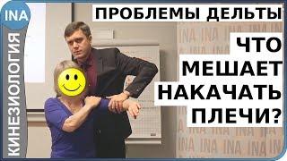 Что мешает накачать плечи? Проблемы мышцы плеча - дельты. Прикладная кинезиология