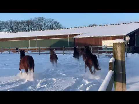 Winterspaß für unsere Nachwuchspferde!