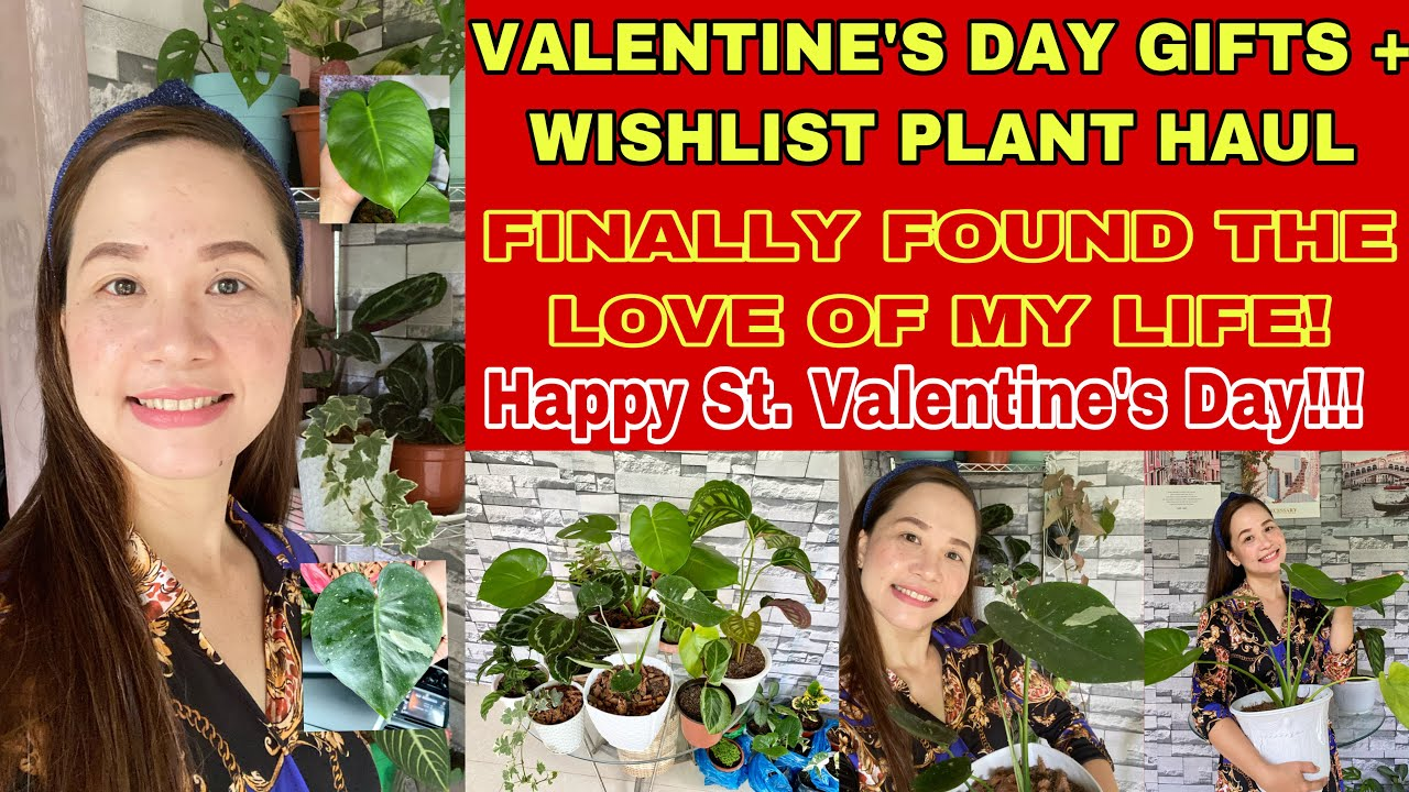 WISHLIST PLANTS HAUL + VD Gifts + Affordable Monstera Thai Constellation + Finally Found the Love