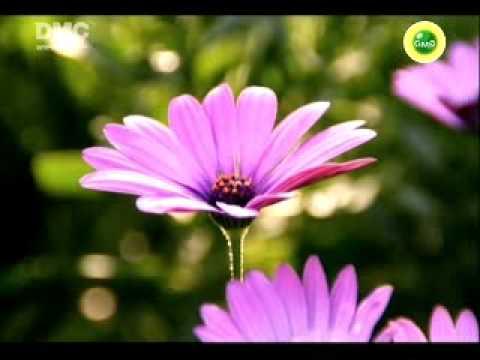 Dhamma Media Channel - www.dmc.tv/en