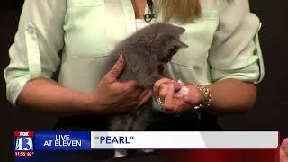 PEARL - Fox 13 Best Friend from the Humane Society of Utah