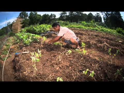 Transplanting Traditions Burmese Project