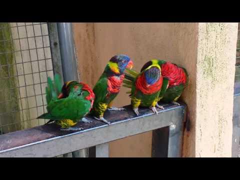Kl bird park beautiful parrots