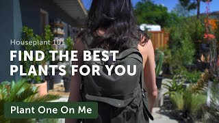 Houseplant 101: How to Shop for Plants — Ep 117