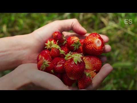 Darum sind Erdbeeren
