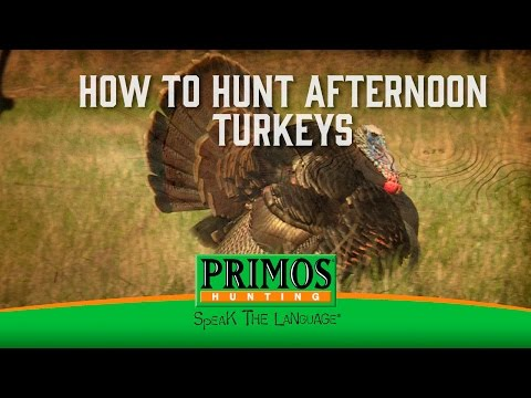 How To Hunt Afternoon Turkeys