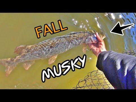Fall MUSKY FISHING On CAVE RUN LAKE!